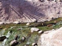 Krokodiler av nilen royaltyfri foto