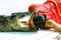 Krokodilerscheinen stockfotos