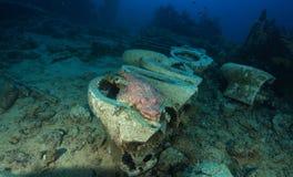 Krokodilfisch-Gebrauchs-WC in Yolanda-Riff stockfotografie