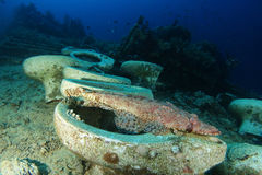 Krokodilfische benutzen WC in Yolanda-Riff in Ras Mohammed-natioanal lizenzfreie stockfotos