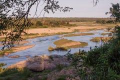 Krokodilfluß in Südafrika Stockfotos