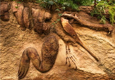 Krokodilfossiel in een zandsteen royalty-vrije stock foto's