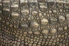 Krokodilhaut Stockfotografie