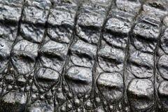 Krokodilhaut Stockbilder