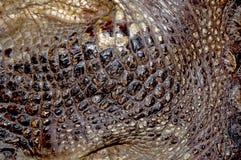 Krokodilhaut-Hintergrundbeschaffenheiten reptilien Schuppige Hautbeschaffenheit von grauen und schwarzen Streifen Hintergrundrept lizenzfreies stockbild