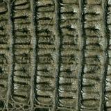 Krokodilhaut-Lederbeschaffenheit lizenzfreies stockfoto