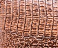 Krokodilhaut-Lederbeschaffenheit Lizenzfreies Stockbild