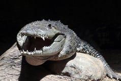 Krokodilhoofd royalty-vrije stock afbeeldingen