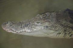 Krokodilhoofd Achtergrondtendens van de hogere textuur van reptielen stock foto's
