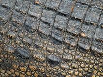 krokodilhud royaltyfri fotografi