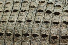 krokodilhudtextur Arkivbilder