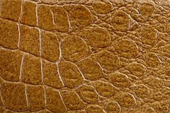 krokodilhudtextur royaltyfri foto