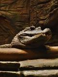 Krokodilhuvud Arkivbild