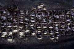 krokodilläder arkivbilder