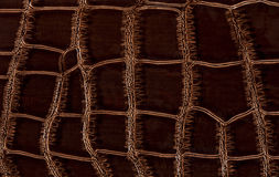 krokodillädertextur Fotografering för Bildbyråer