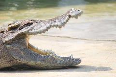 Krokodillandbouwbedrijf en dierentuin, Krokodillandbouwbedrijf Thailand Stock Fotografie