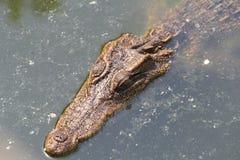 Krokodillantgård och zoo, krokodillantgård Thailand Royaltyfri Fotografi