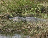 Krokodille Dichte Omhooggaand royalty-vrije stock fotografie
