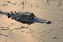 Krokodille Hoofd royalty-vrije stock foto