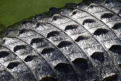 Krokodille Huid royalty-vrije stock fotografie
