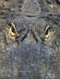 Krokodille Ogen Stock Foto's