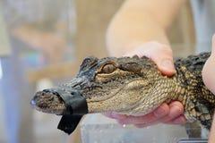 Krokodilleholding stock foto