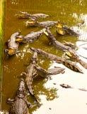 Krokodillen in pool op krokodillandbouwbedrijf Stock Foto's
