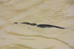 Krokodillerivier, kakadu nationaal park, Australië Stock Fotografie