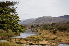 krokodilliggandeflod Royaltyfri Bild