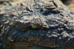 Krokodilnahaufnahme Lizenzfreies Stockbild