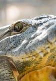 Krokodilnahaufnahmeaugen und -zähne Stockfotos
