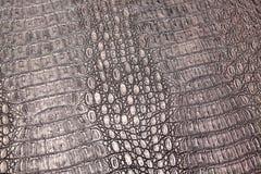 Krokodilschlangenschlangen-Alligatornahaufnahme Stockbilder