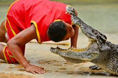 Krokodilshow Royaltyfri Bild