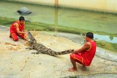 Krokodilshow Royaltyfria Bilder