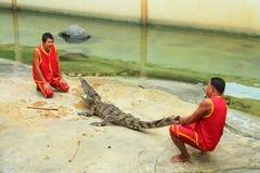 Krokodilshow Royaltyfri Foto