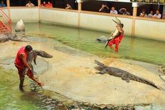 Krokodilshow Arkivbilder