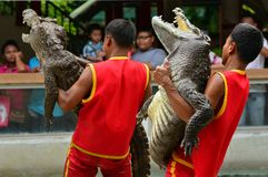 Krokodilshow Royaltyfri Fotografi