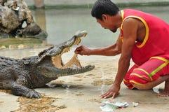Krokodilshow i Thailand Royaltyfri Fotografi