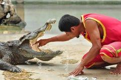 Krokodilshow i Thailand Fotografering för Bildbyråer