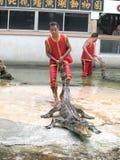 Krokodilshow på krokodillantgården Arkivfoto