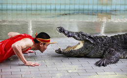 krokodilshow thailand Royaltyfria Bilder