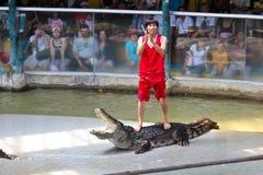 krokodilshow thailand Royaltyfri Bild