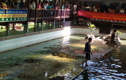 krokodilshow thailand arkivbild