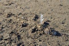 Krokodilskulptur på stranden Royaltyfri Fotografi
