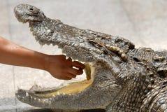 krokodilspelrum Arkivfoton