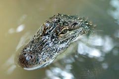 krokodilvatten Royaltyfri Foto
