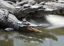 krokodilzoo Arkivfoto