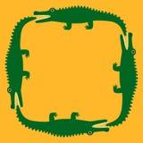 Krokodyl Zdjęcie Royalty Free