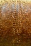 krokodyl brown Fotografia Royalty Free