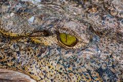 Krokodyl lub aligator Obrazy Royalty Free